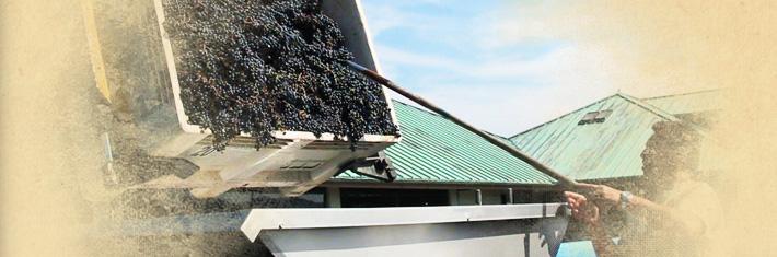 crush-winemaking_header
